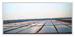 The square fields by SRUJAL