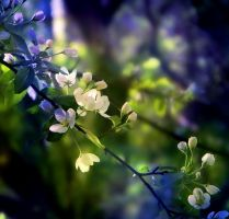 Honey spring by Iridescent-happinesS