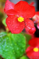 Flower03 by McGough-Photography
