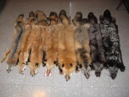 Variety of Fox Pelts by midnightwolfdesigns