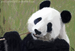 Chalk Panda2 by GrafixGirlIreland