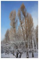 frosted trees... by Iulian-dA-gallery