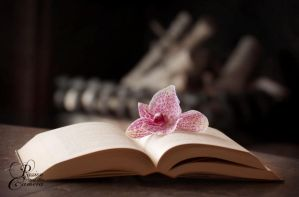 Flower and Book II by PassionAndTheCamera