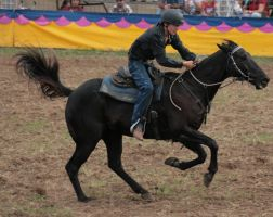 Barrel Racing2 by newdystock
