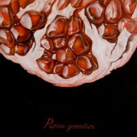 Punica granatum (better quality) by nik159
