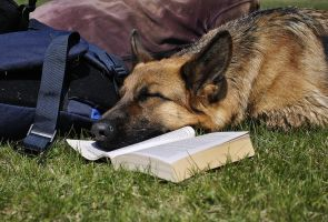 dog and book by Shelaina