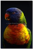 Lorikeet Portrait by LoneWolfPhotography