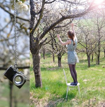 Spring is around you by Holunder