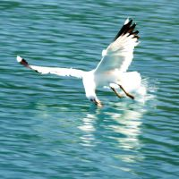 seagull by carchar0th
