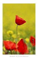 Portrait of a Poppy by DimensionSeven