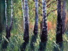 Birch grove by Lillian-Bann