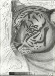 Tiger's face by jetfree730