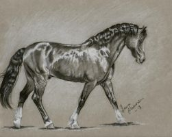 Charcoal pony by Hei-La