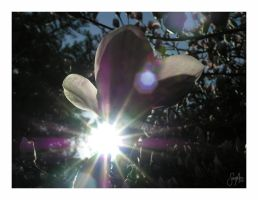 Shining Through by cera