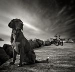 Dog and... by denis2