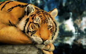 Tiger eyes lie down by tristix