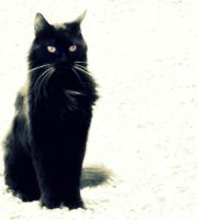 Le chat noir by Cinnnamon
