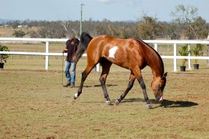 GE Arab pinto trot side on nose down neck arc by Chunga-Stock