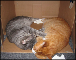 Best Of: Cat Family - Box Kitties by pukwudgie