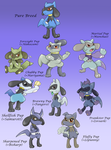 Pokemon Mixed Breeds: Riolu by Call-Of-The-Indie