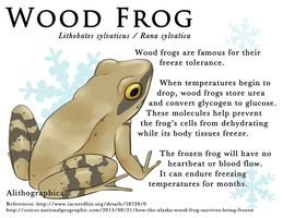 The Freezing Frog by Alithographica