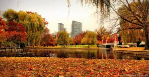 Autumn in Boston IV by MyLifeThroughTheLens