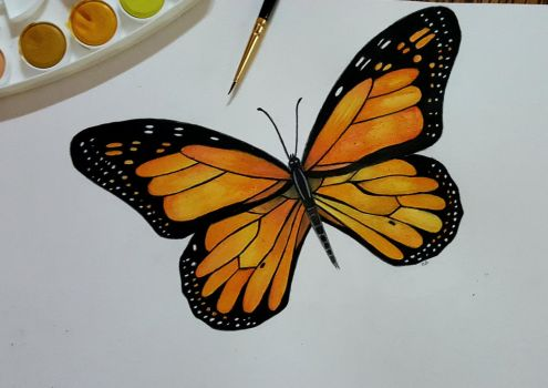 Monarch butterfly  by xXLittleTigressXx