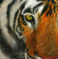Tiger Pastel Study by corvuscreative