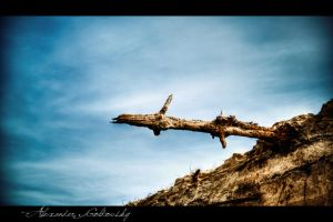 Dead wood by 10thapril