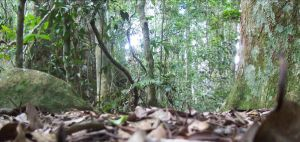 Floor of the Forest by lil-richo