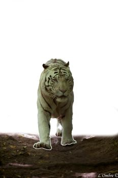 White tiger other version CL by LOmbre24