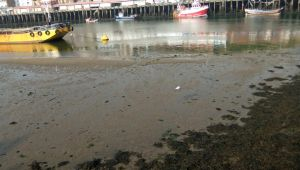 Whitby Harbour (7) by PaulineMoss