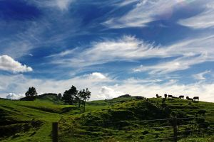 New Zealand Highway by sayra