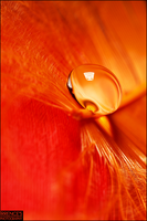 Amber drop by Irrence