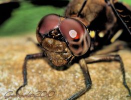 Dragonfly 2010 by Gooiool