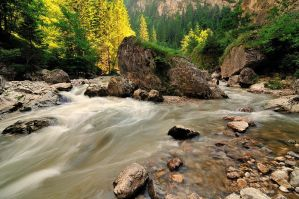 in the middle of the creek by Konczey-Zsolt