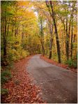 Fall Trails by Tonsatz