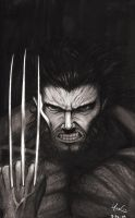 Wolverine Portrait Sketch by Protokitty