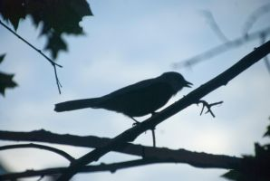 Jay In Silhouette 2 by Miss-Tbones