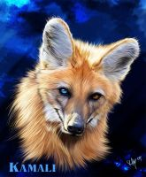 Kamali as a Maned Wolf by Novawuff
