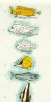 Some Fishes Sketchs by commander-salamander
