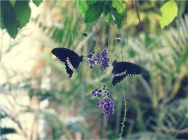 Butterfly love by Blavi