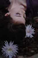 Chrysanthemum Lullaby by ajphoto