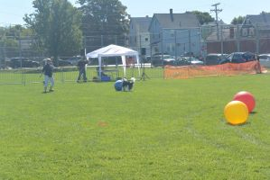 2014 Dog Festival, Treiball Session 5 by Miss-Tbones