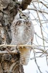 Great Horned Owl by DanielReaume