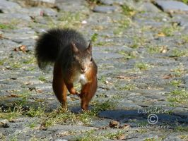 Squirrel 119 by Cundrie-la-Surziere