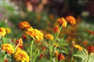 flash of yellow by Rommi3