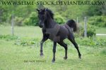 black arabian canter at camera by slime-stock