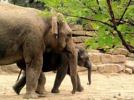elephants mother and son by alieetf