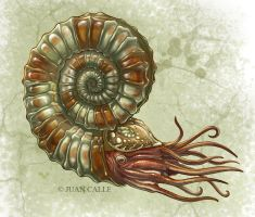 Ammonite by Onikaizer